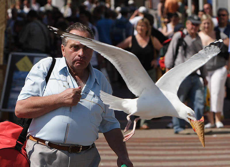 seagull-takes-ice-cream-perfect-timing-photo
